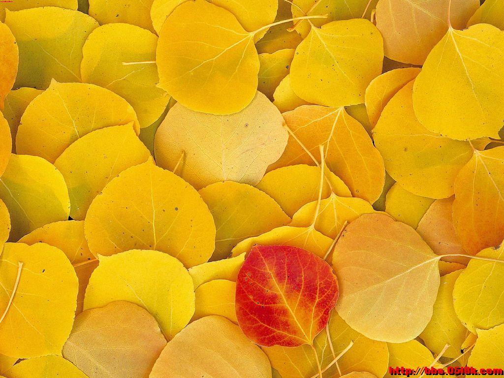 十月 落叶依然一抹瑟瑟秋风过 抹去岁月沧桑 伫立秋风中 习惯用熟悉的双眸凝视这陌生而新鲜的世界 心中依然充满好奇与向往 于是 用心灵之笔浓情重彩泼墨挥洒图片